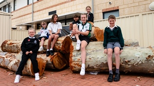 New life for cleared trees at local school