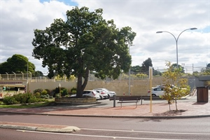 Historic Tree to relocate in Bayswater